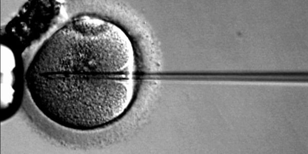 Dos técnicas de reproducción asistida